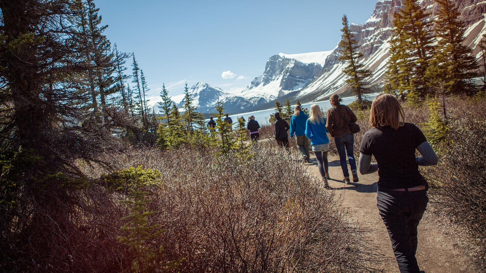 Travellers going for a stroll in the beautiful backfrop of the Alberta icefields