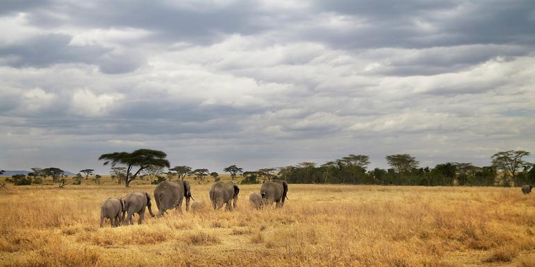 Tanzania Camping Adventure