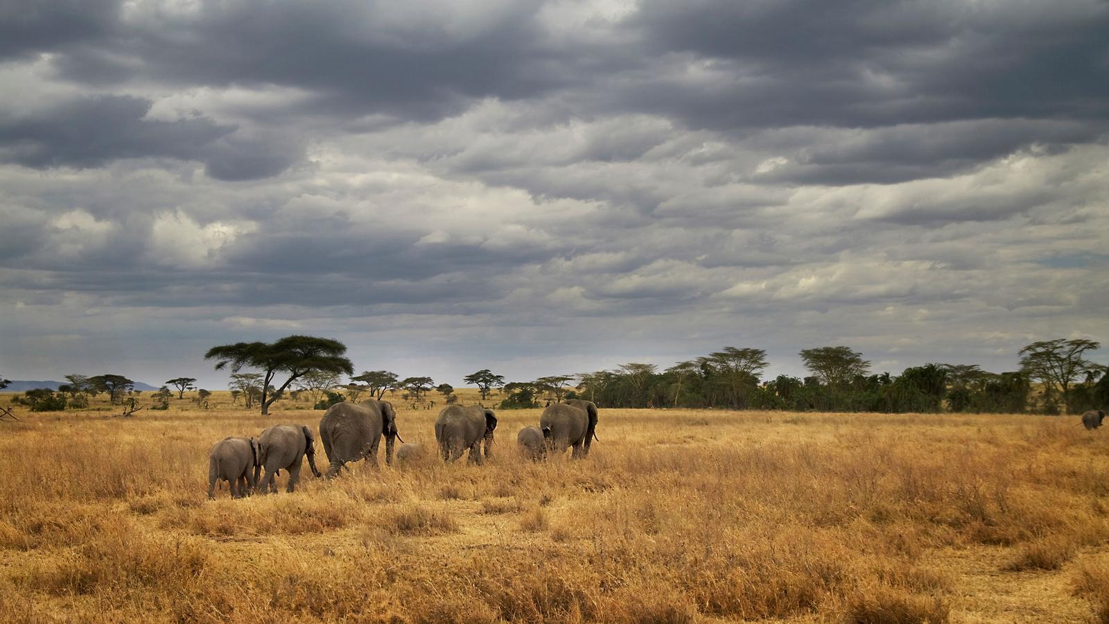 Masai & tansania camping safari in tansania afrika g adventures