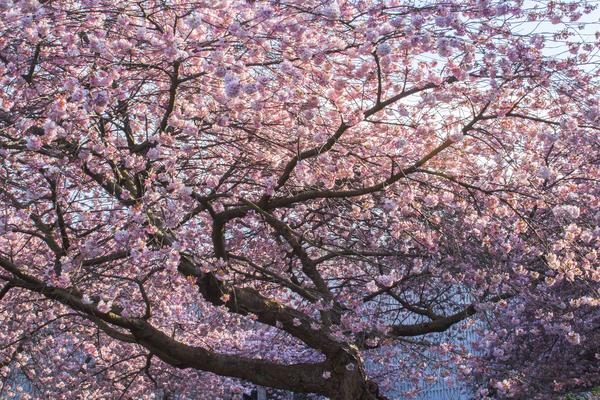 From locals' favourite trees to beautiful blooms, Vancouver transforms in the spring