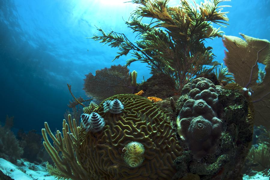 Close to mainland Honduras await some of the Caribbean's best underwater adventures