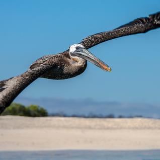 Galápagos — North, Central, & South Islands aboard the Eden