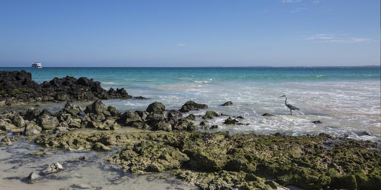 Cover Image of Complete Galápagos - Yolita