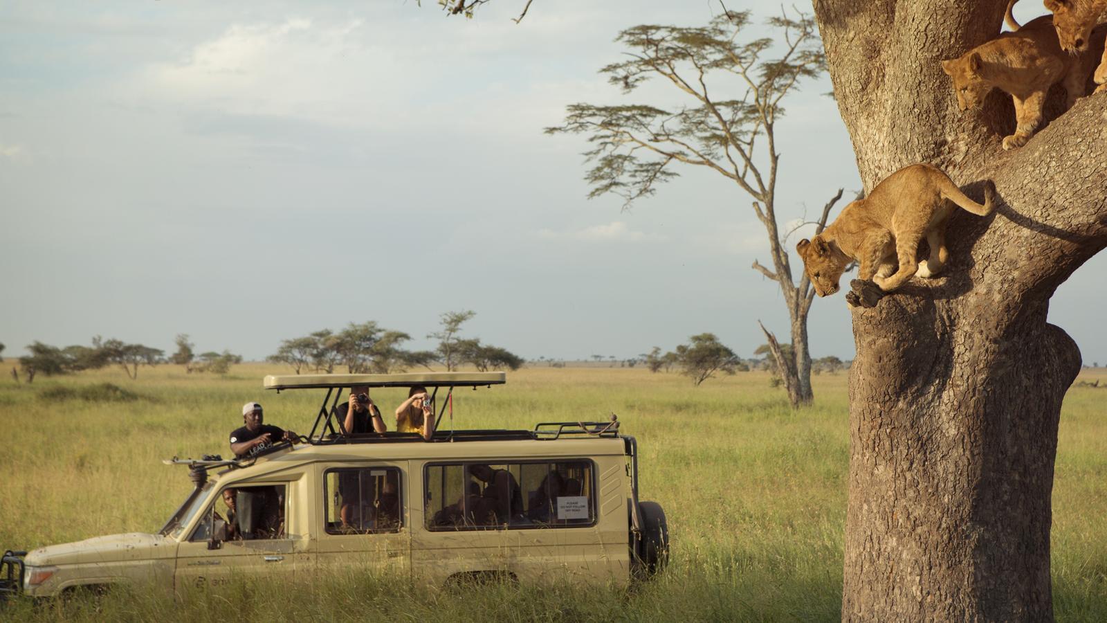 Kenya & Tanzania Safari Experience in Kenya, Africa - G Adventures