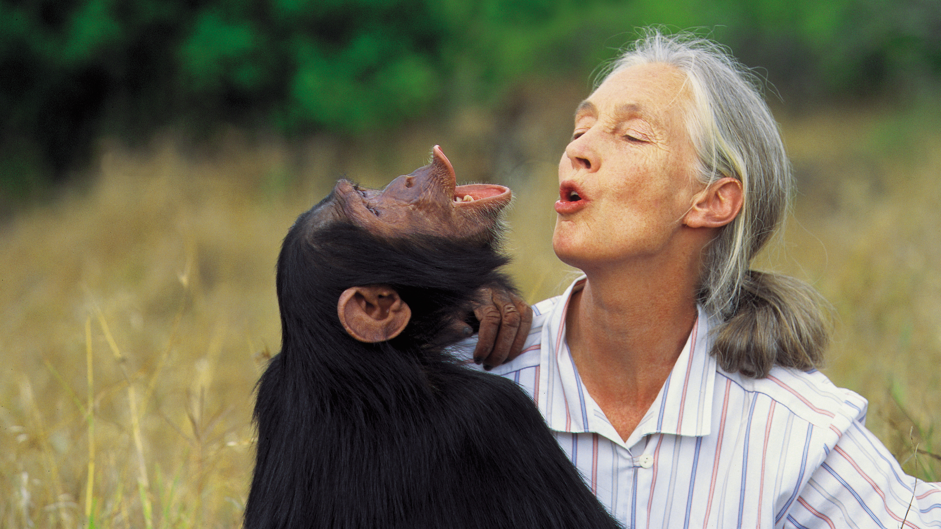 Image result for jane goodall