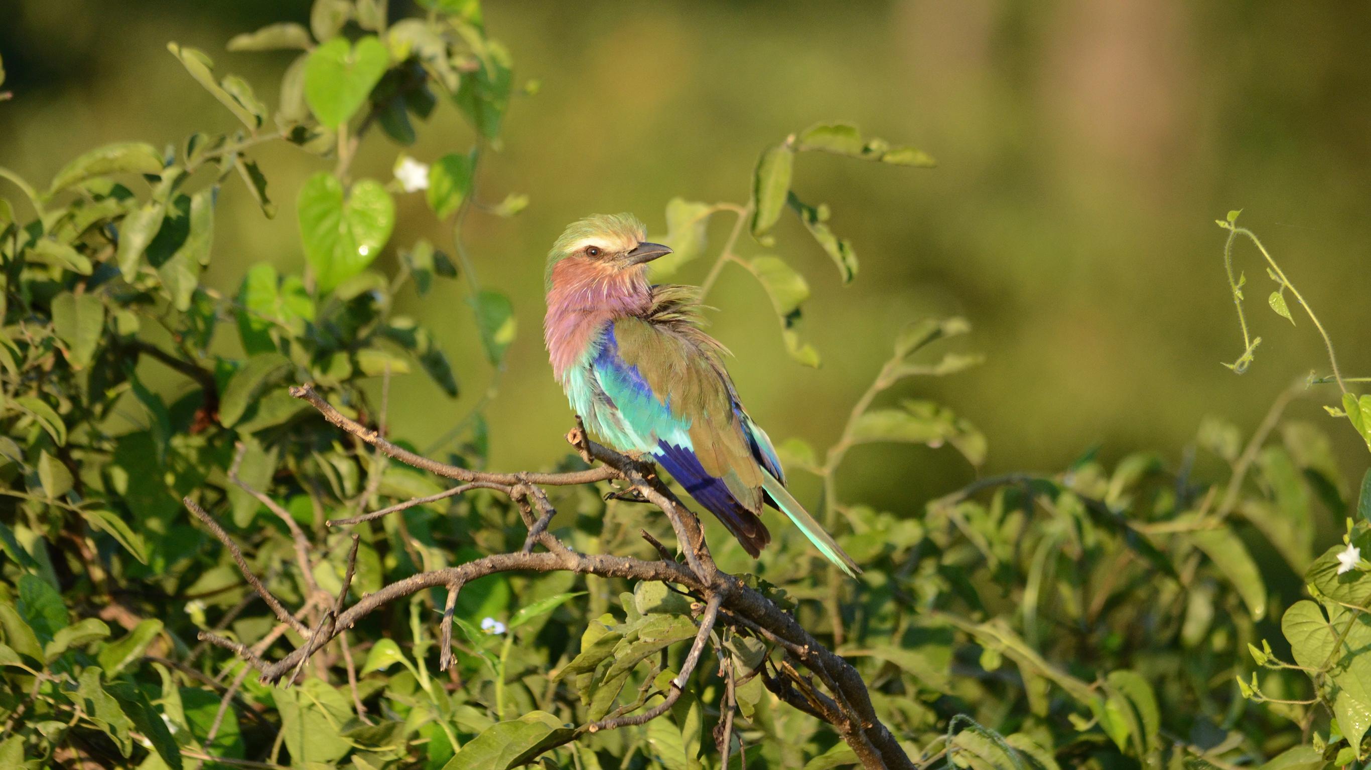 Safari in Botswana & Simbabwe