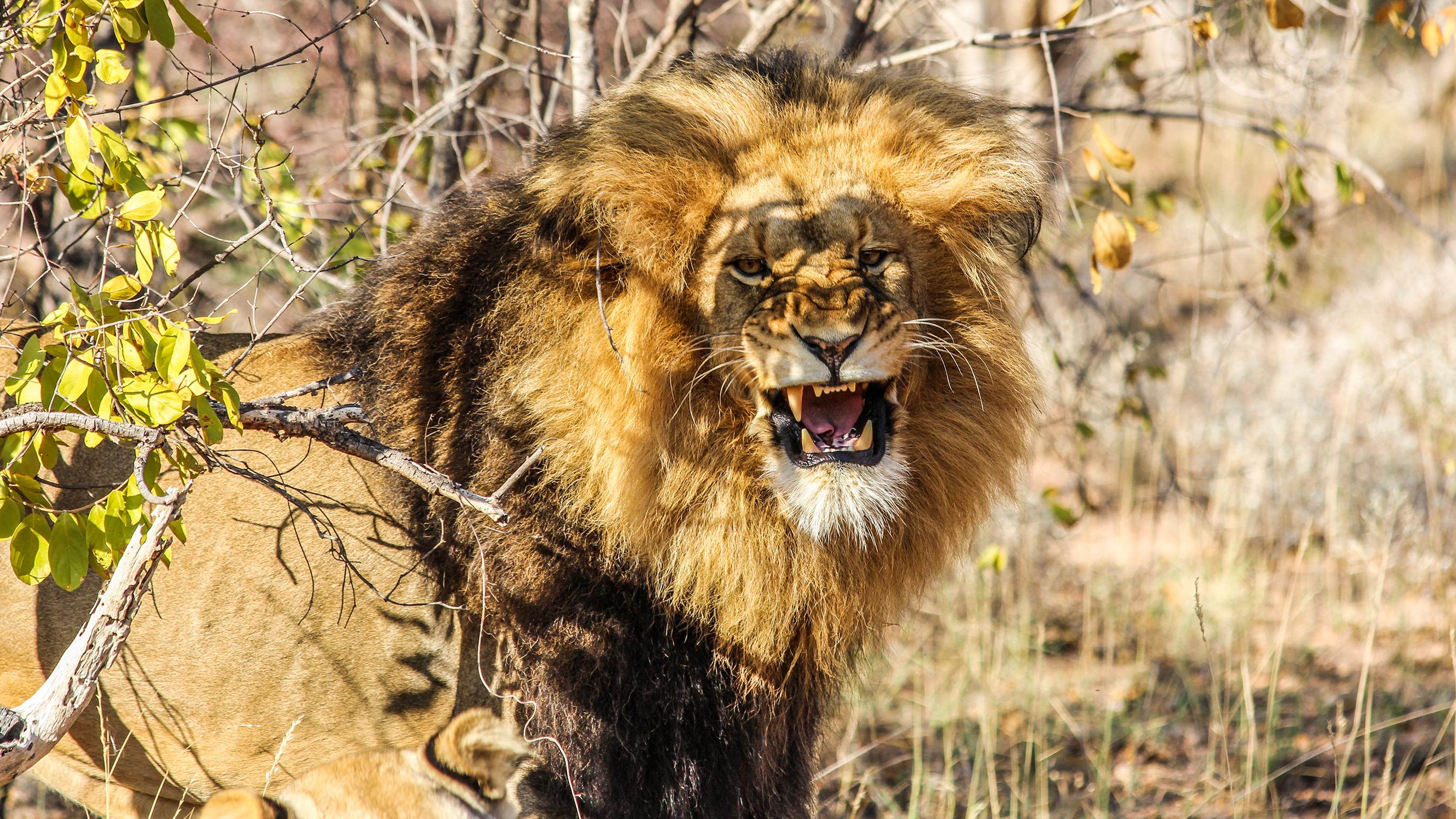 Krüger-Nationalpark, Wasserfälle & Simbabwe – Tierwelt und Tänze