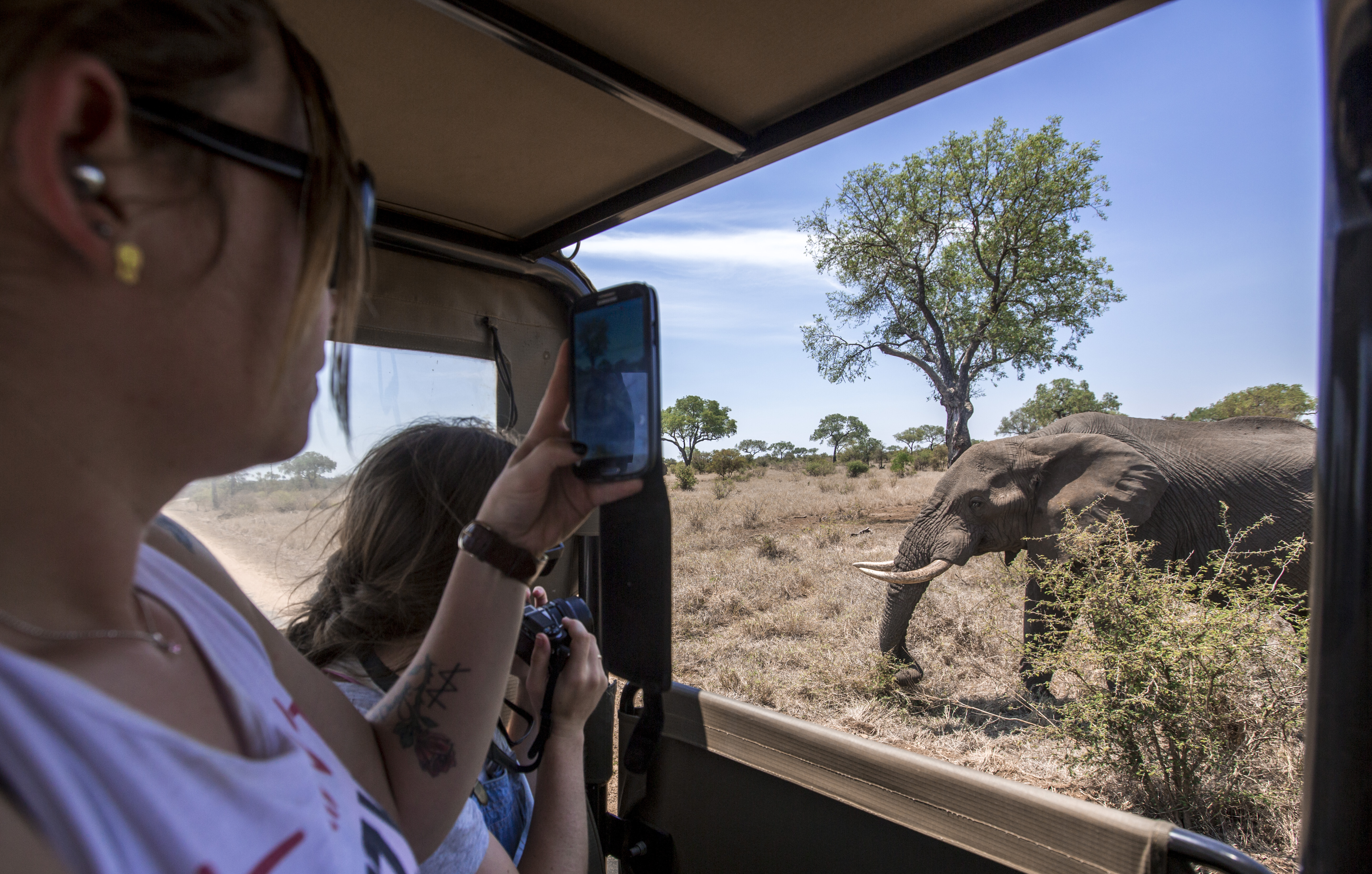 Der Süden Afrikas nach Maß – Kapstadt, Krüger & Simbabwe
