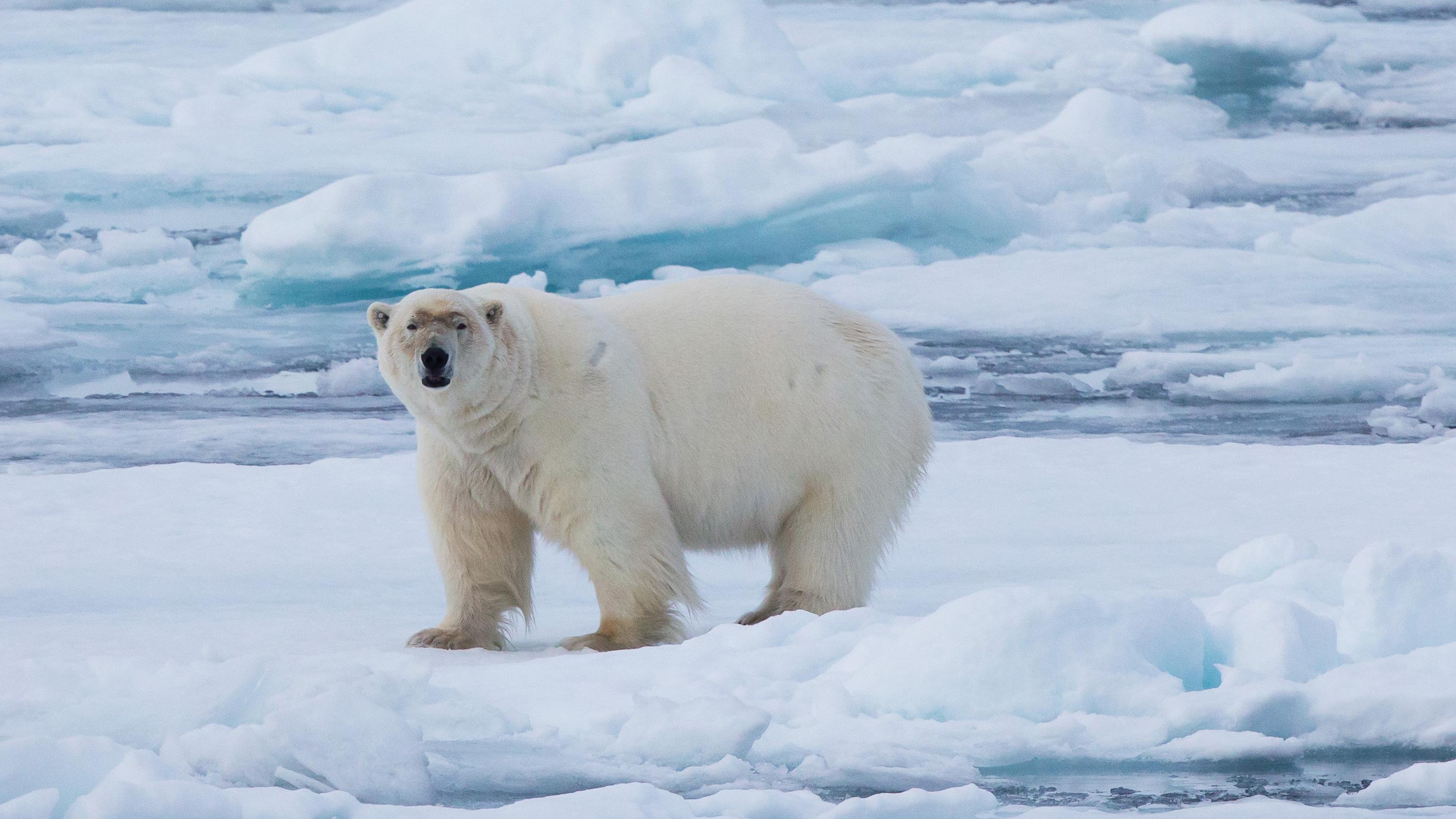 Im Reich der Eisbären XL