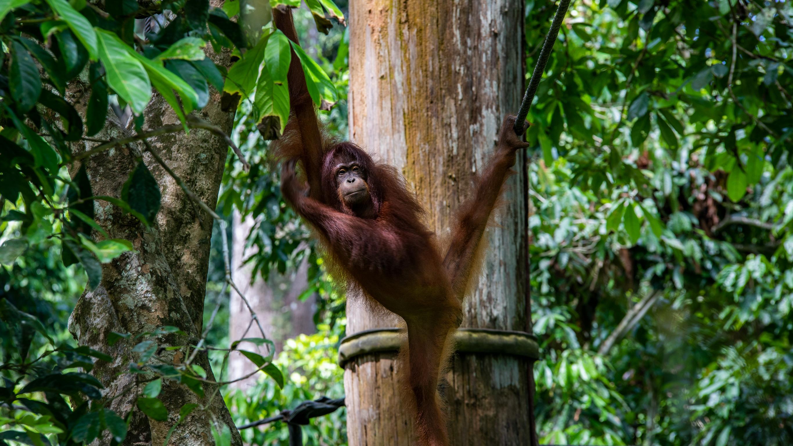 Das Beste von Borneo