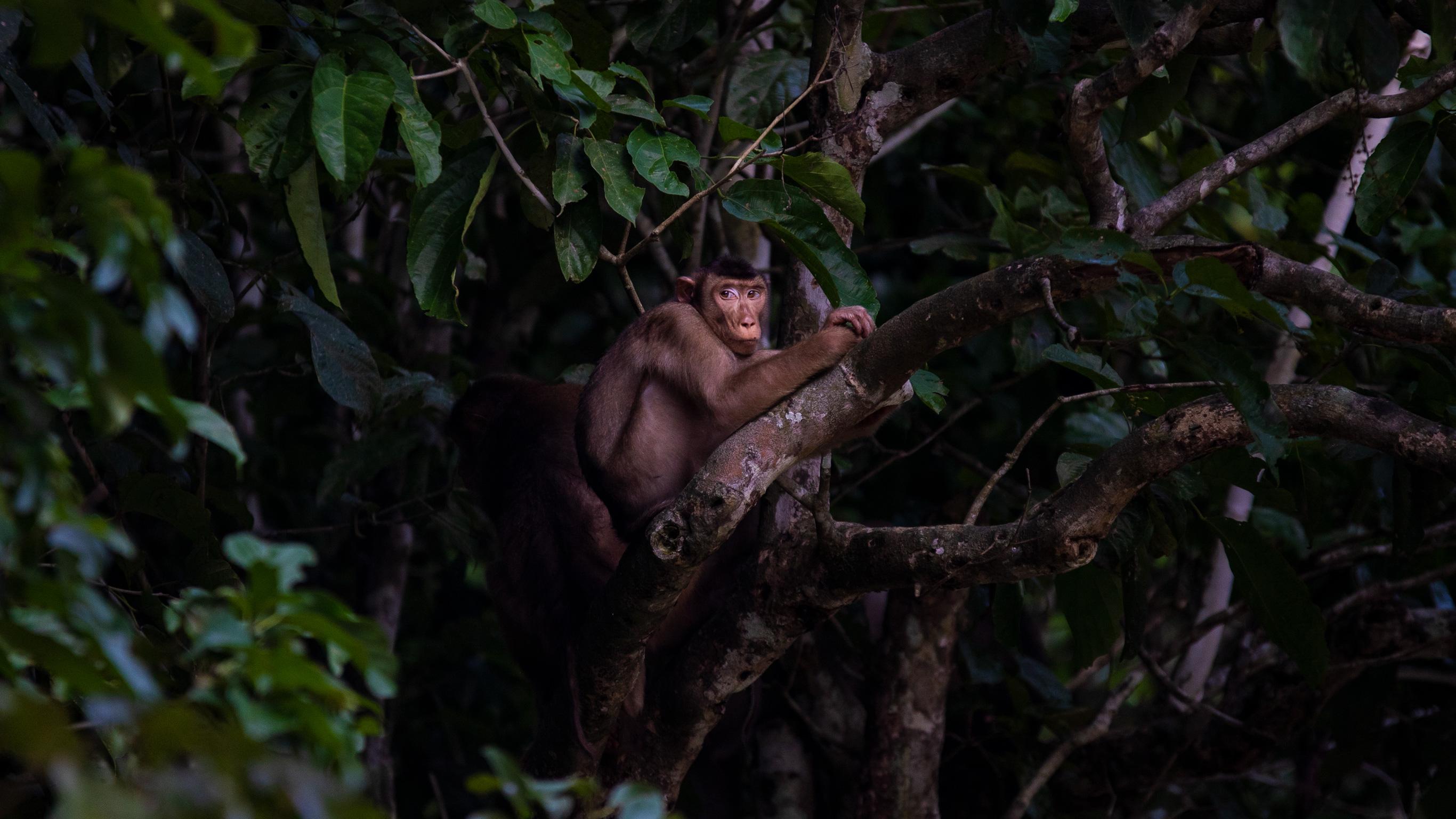 Erlebe Borneo – Rundreise durch Ost-Sabah