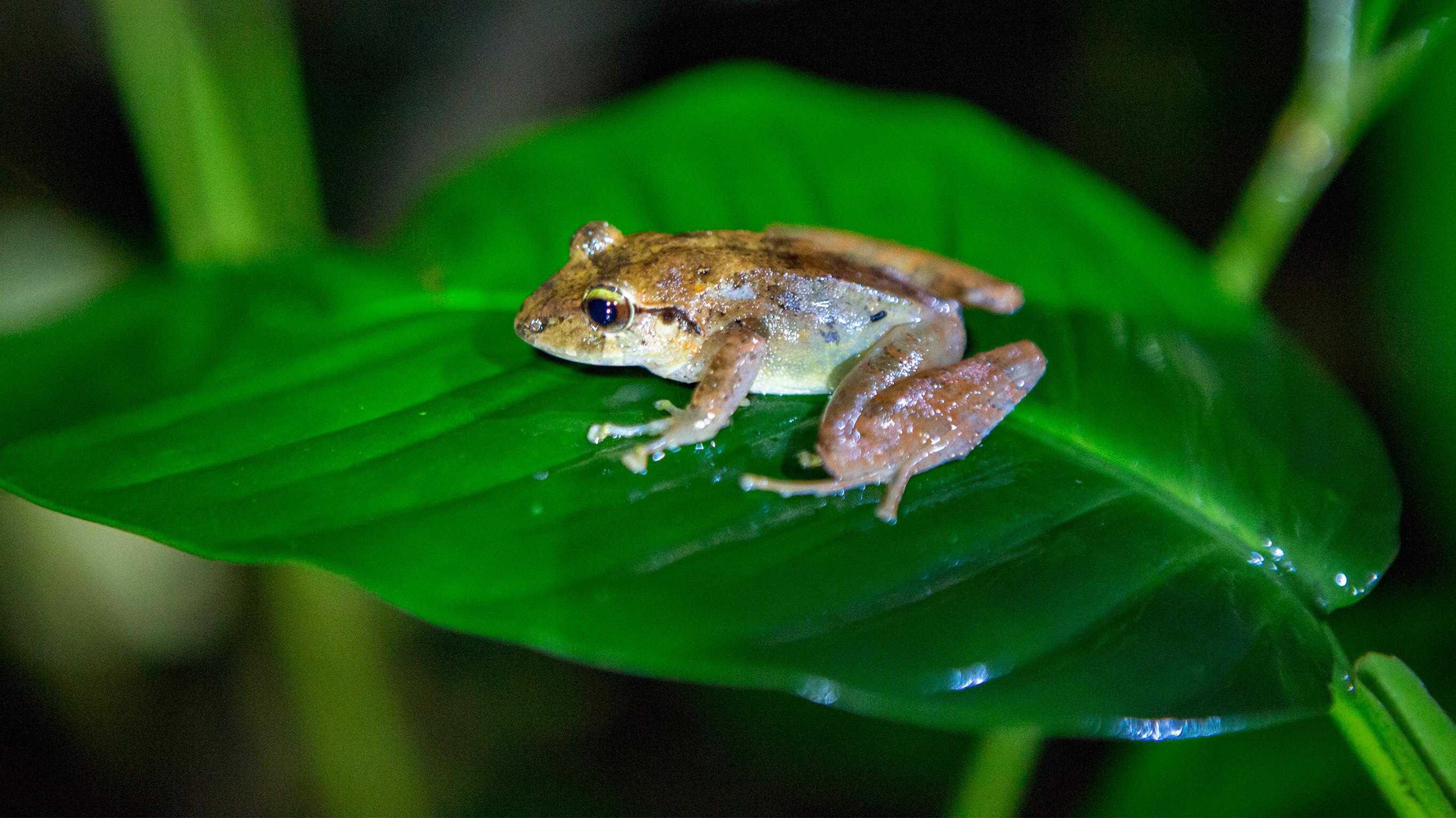 Costa Rica nach Maß