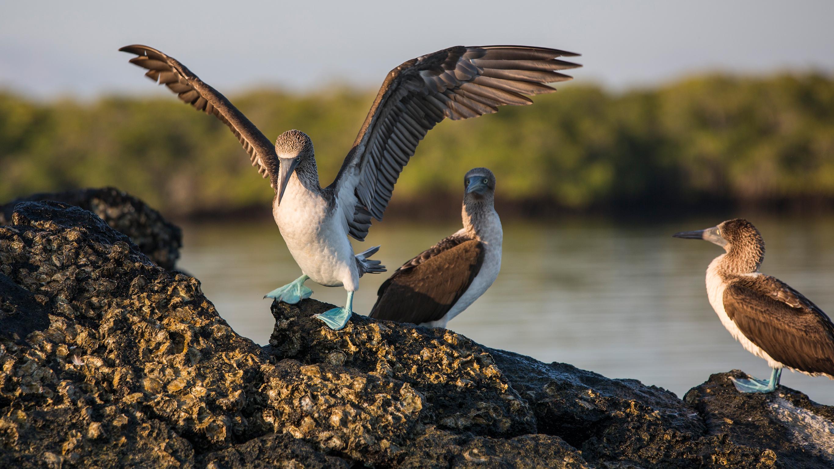 Galápagos – Südliche & östliche Inseln an Bord der Eden