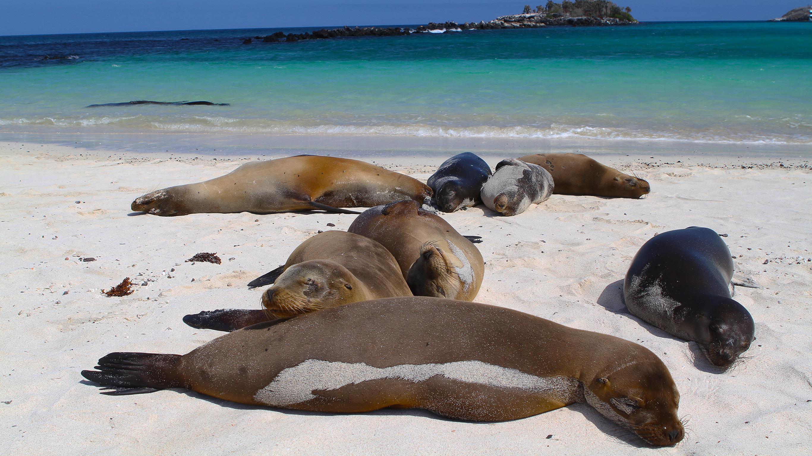 Galápagos - Westliche & zentrale Inseln an Bord der Eden