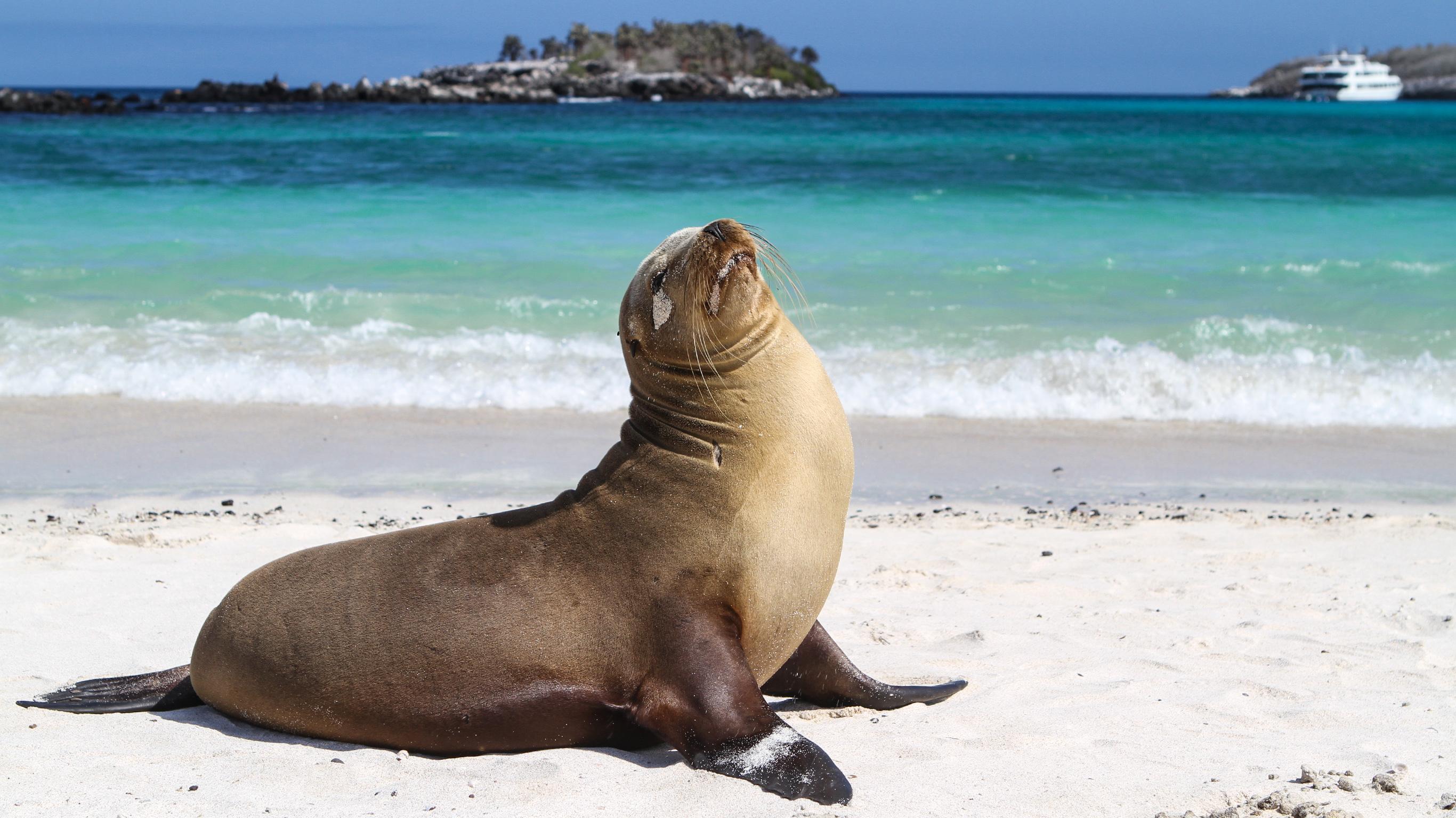 Galápagos – Nördliche, westliche & zentrale Inseln an Bord der Yolita