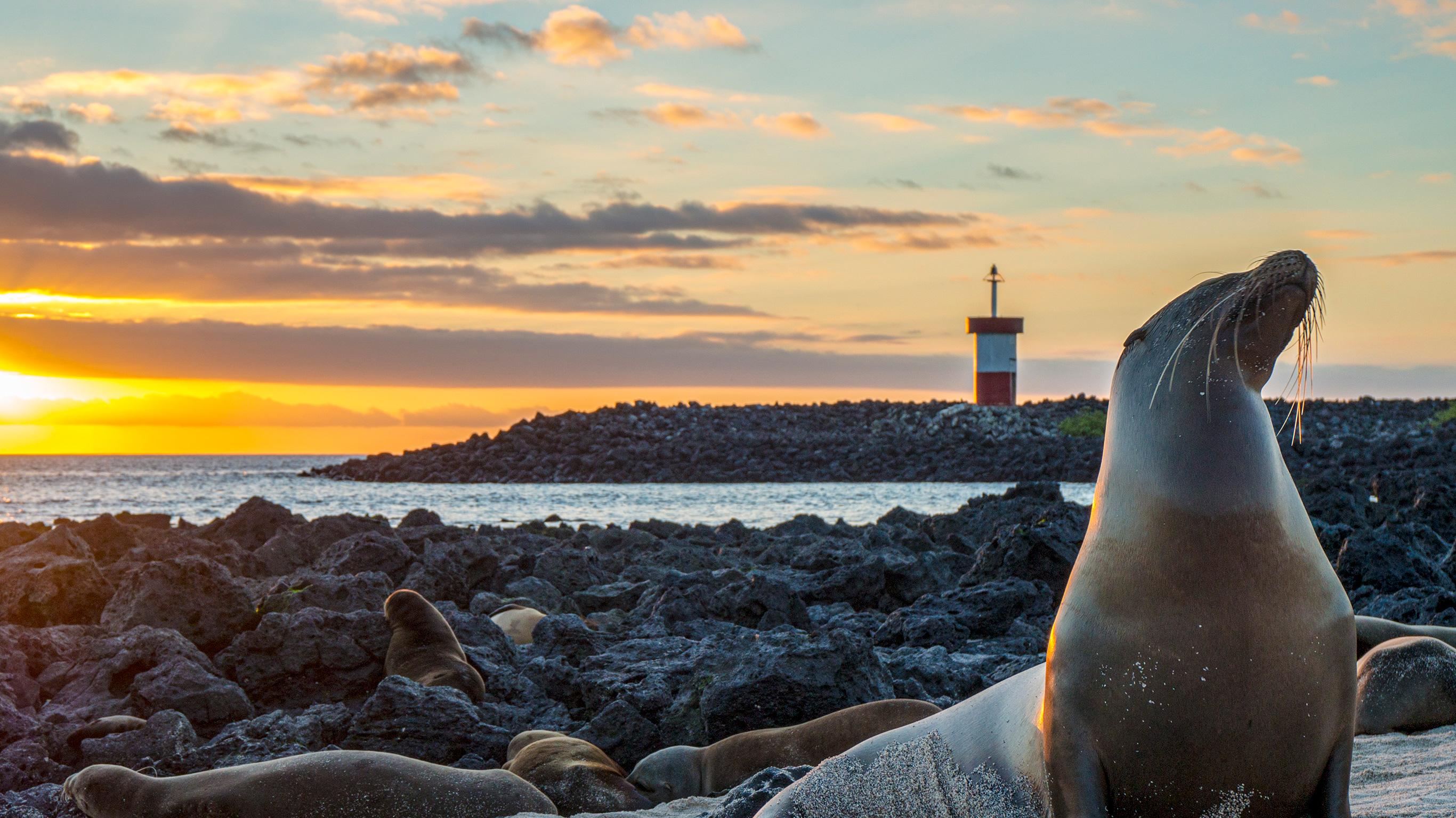Galápagos – Zentrale und östliche Inseln an Bord der Reina Silvia Voyager (reine Kreuzfahrtreise)