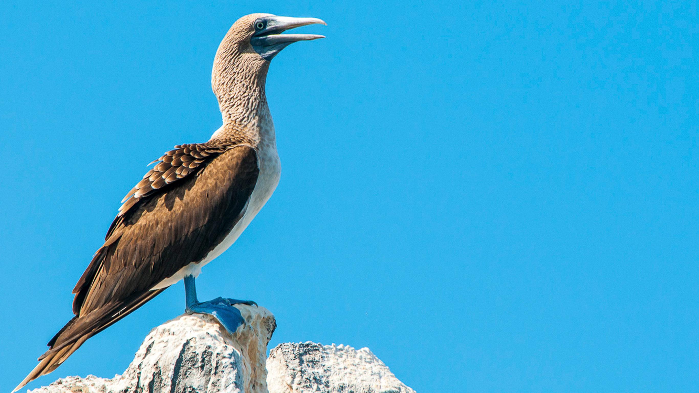 Galápagos – Westliche Inseln an Bord der Reina Silvia Voyager (reine Kreuzfahrtreise)