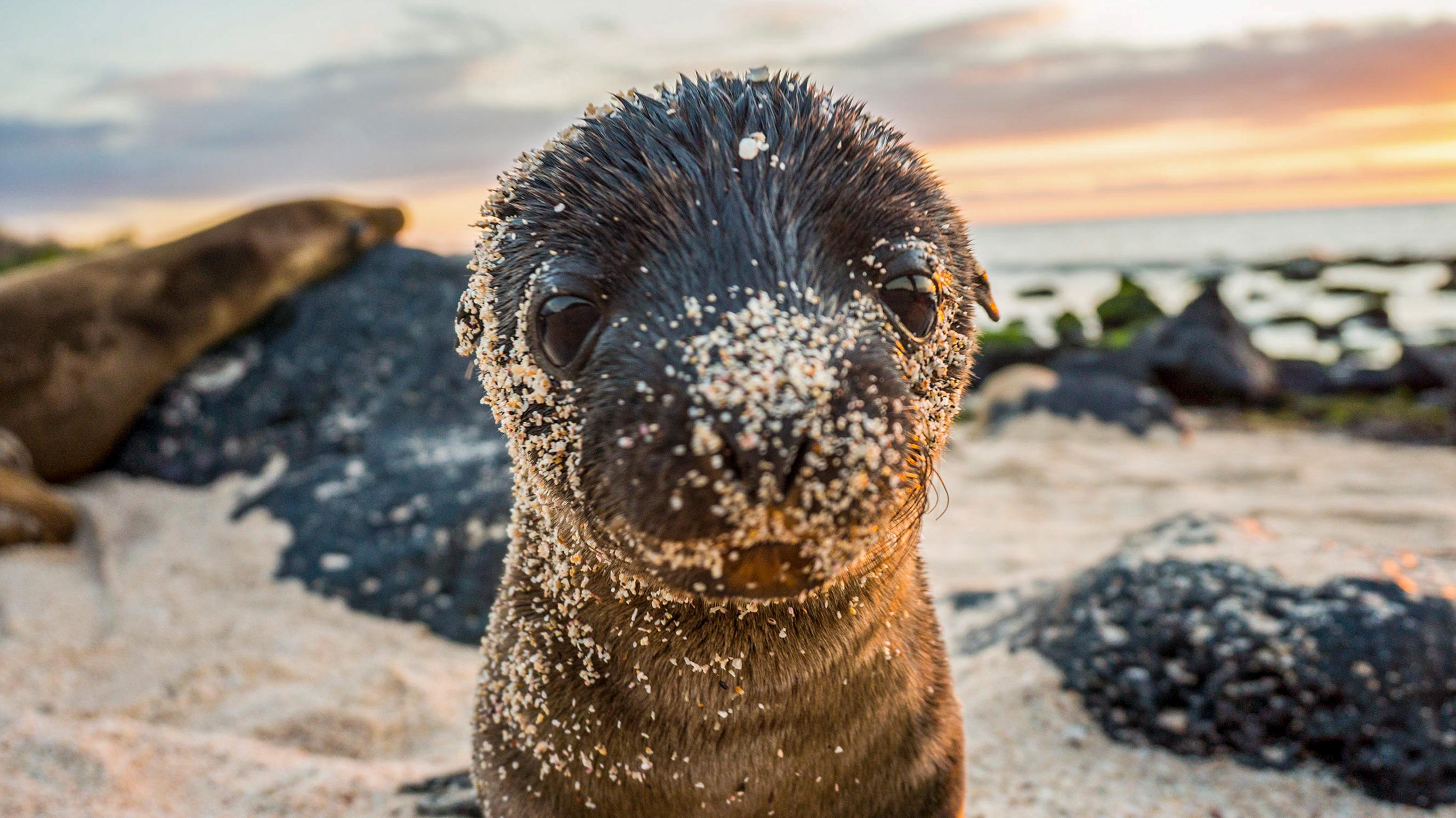 Galápagos – Westliche und zentrale Inseln an Bord der Reina Silvia Voyager