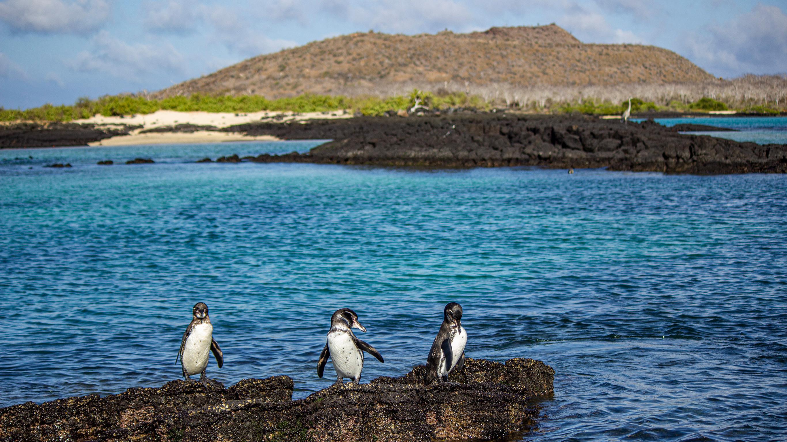 Galápagos – Zentrale und östliche Inseln an Bord der Reina Silvia Voyager