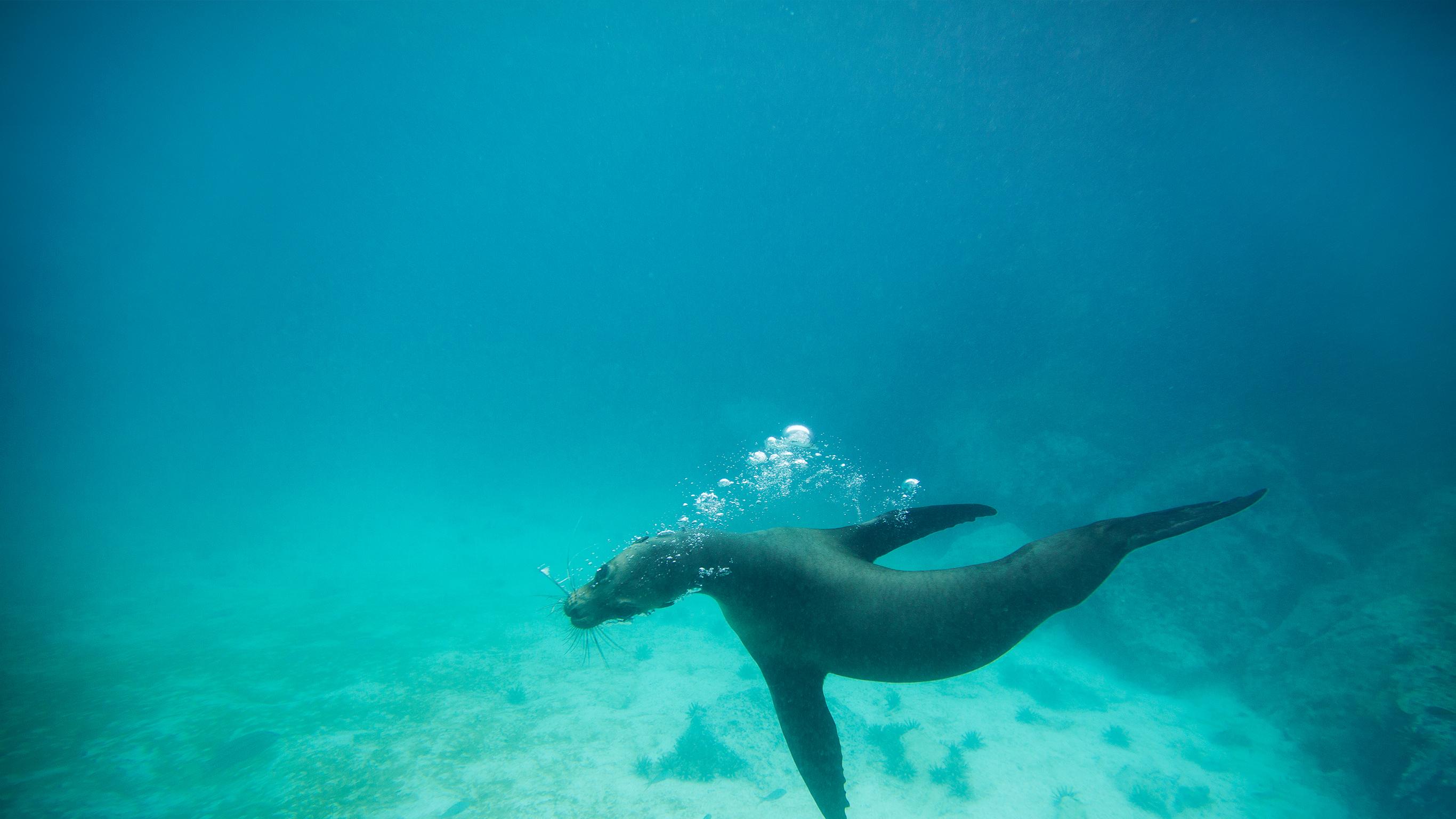 Galapagos Land & Meer – Zentrale & südliche Inseln an Bord der Yolita