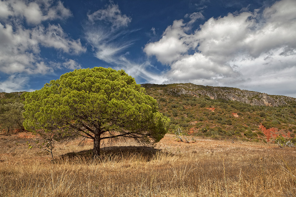 Portugal's own Table Mountain at Rocha da Pena. Photo courtesy Falk Lademann, CC BY-NC-SA 2.0.