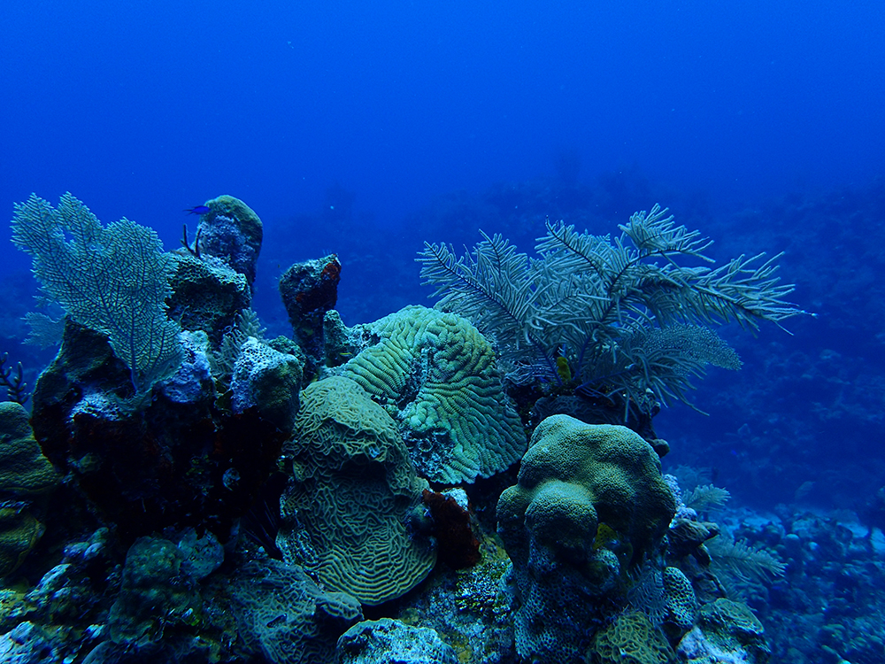 The underwater flora and fauna surrounding Roatán make it heaven for divers. Photo courtesy of Timothy W.