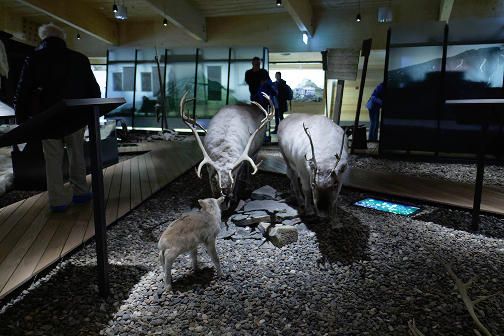 The Svalbard Museum teaches visitors about the Arctic's wild residents. Photo courtesy of Ronald W.