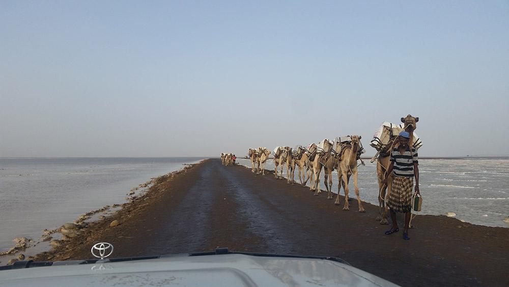 Caravans walk two days to sell salt blocks. Photo courtesy Robert Reid.