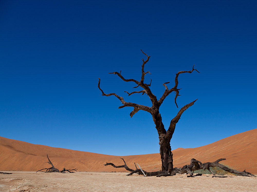 Deadvlei pan. Photo courtesy Julien L.