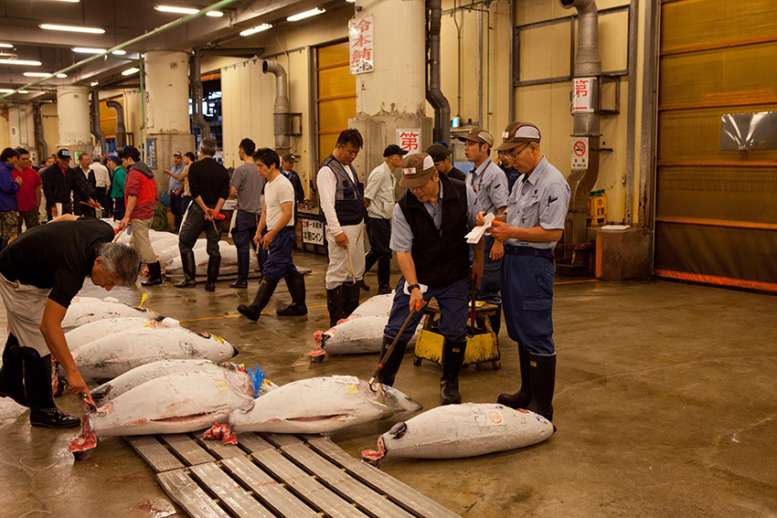 It's tuna for days at Tsukiji.