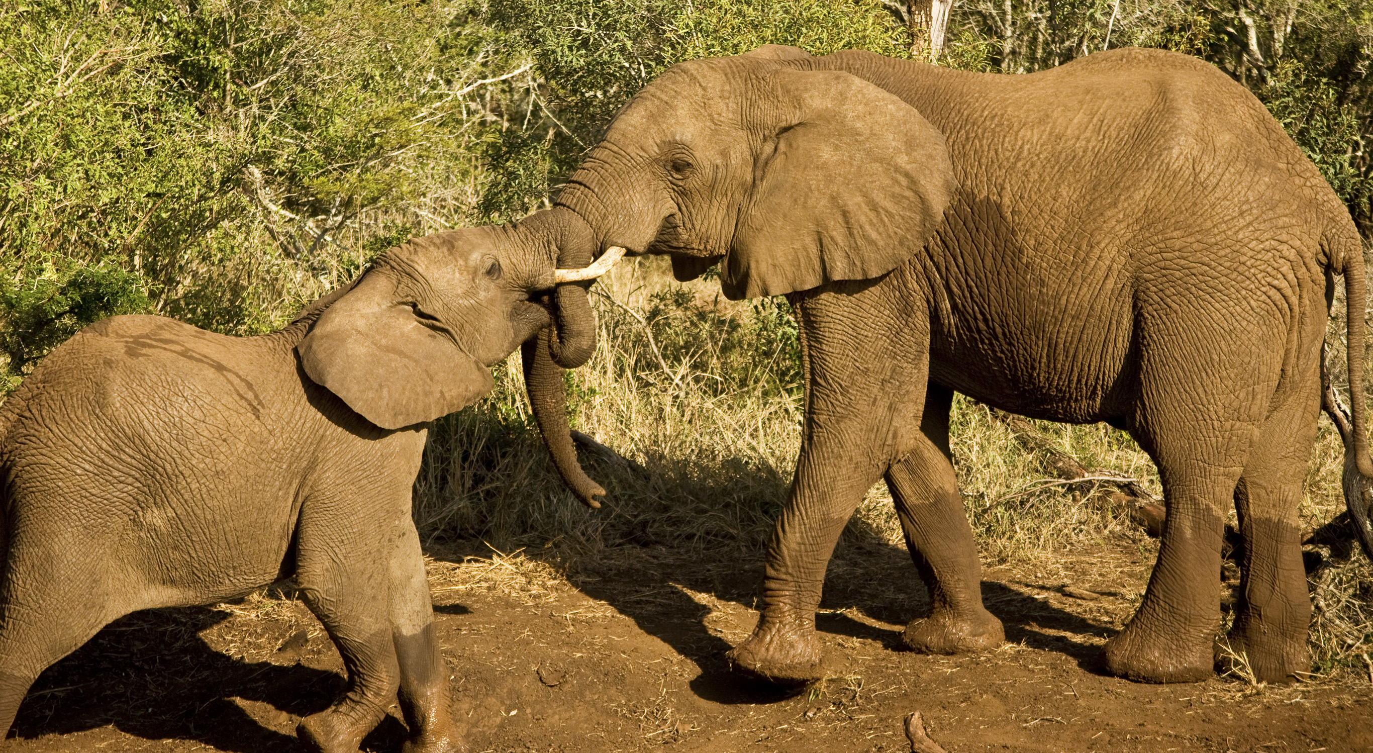 Why is animal welfare important to G Adventures? - G ...