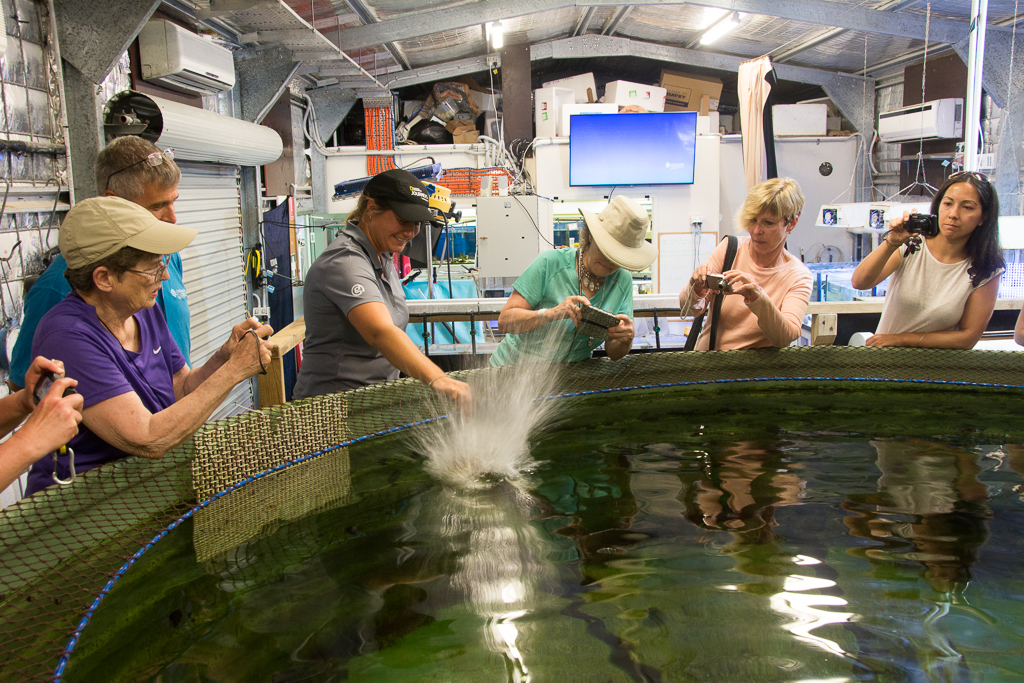 Feeding time at James Cook University research aquarium.
