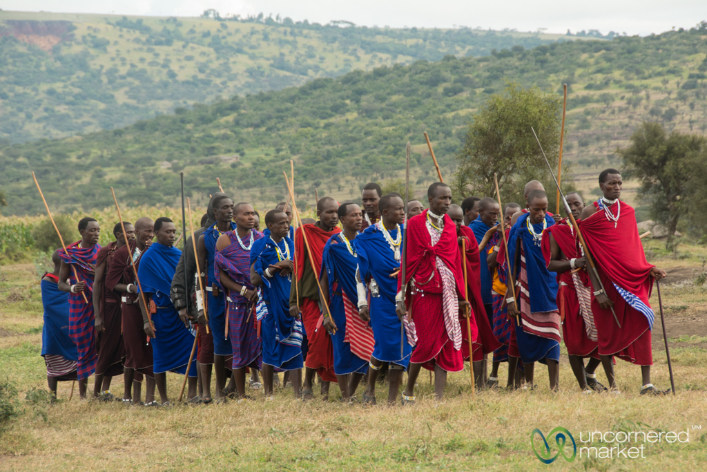The Maasai warriors approach the celebration, moving as one.
