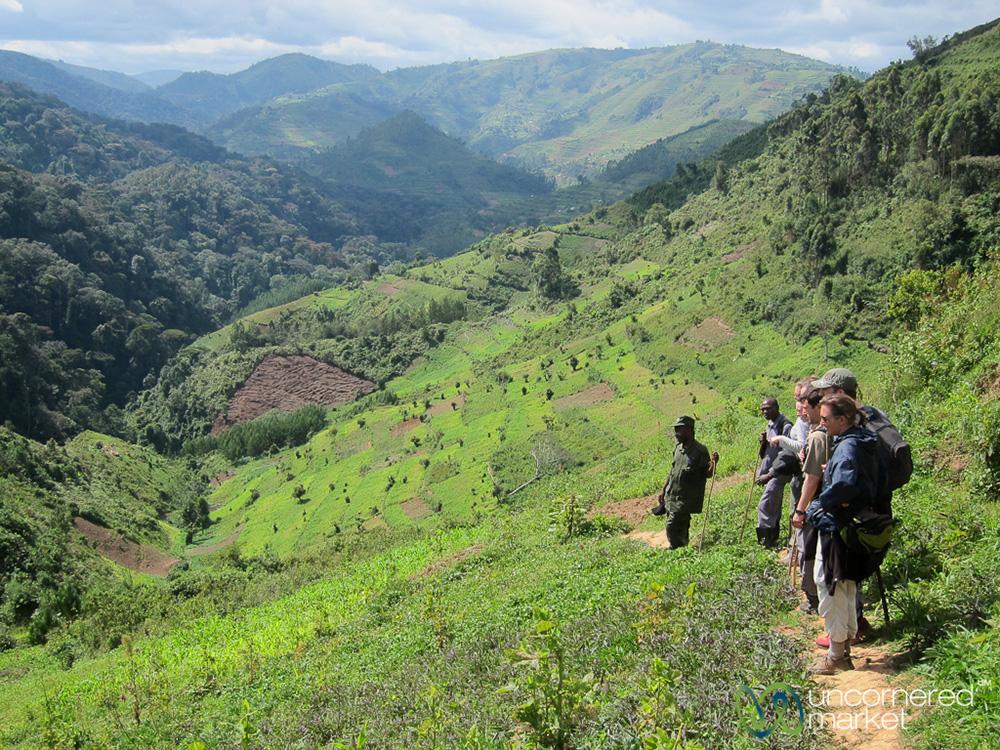 Village farmlands on the edge of the Bwindi Impenetrable National Park, Uganda.