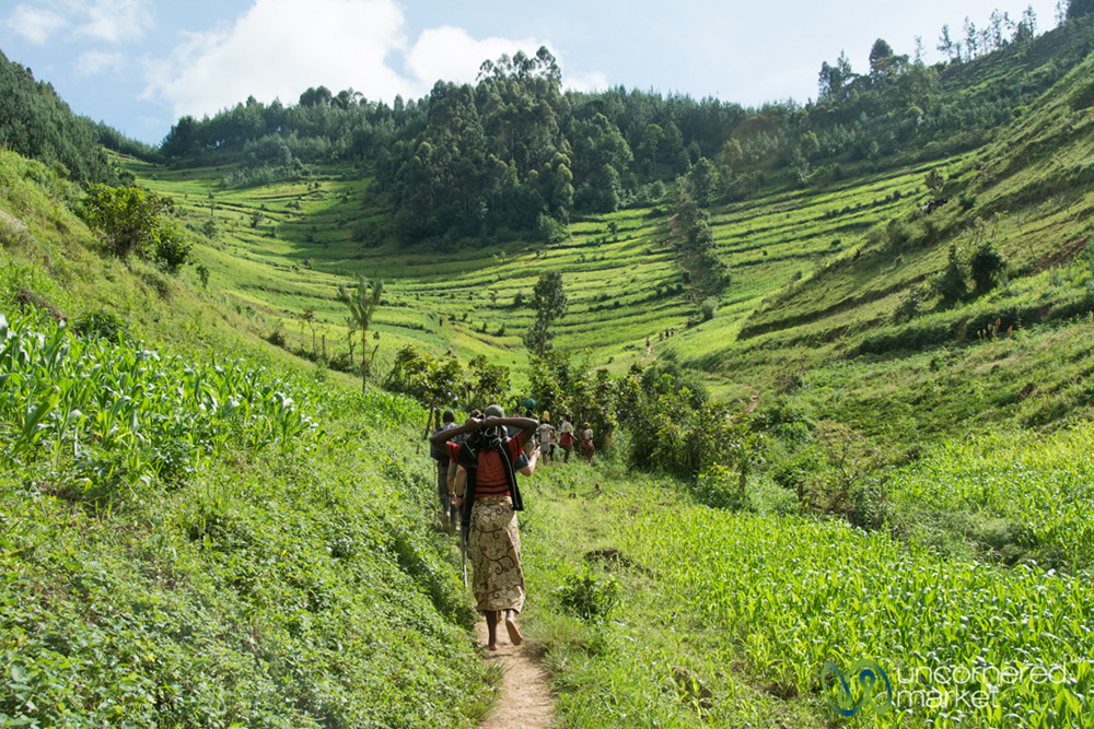 Walking with local villagers through the fields to reach the forest that gorillas call home.