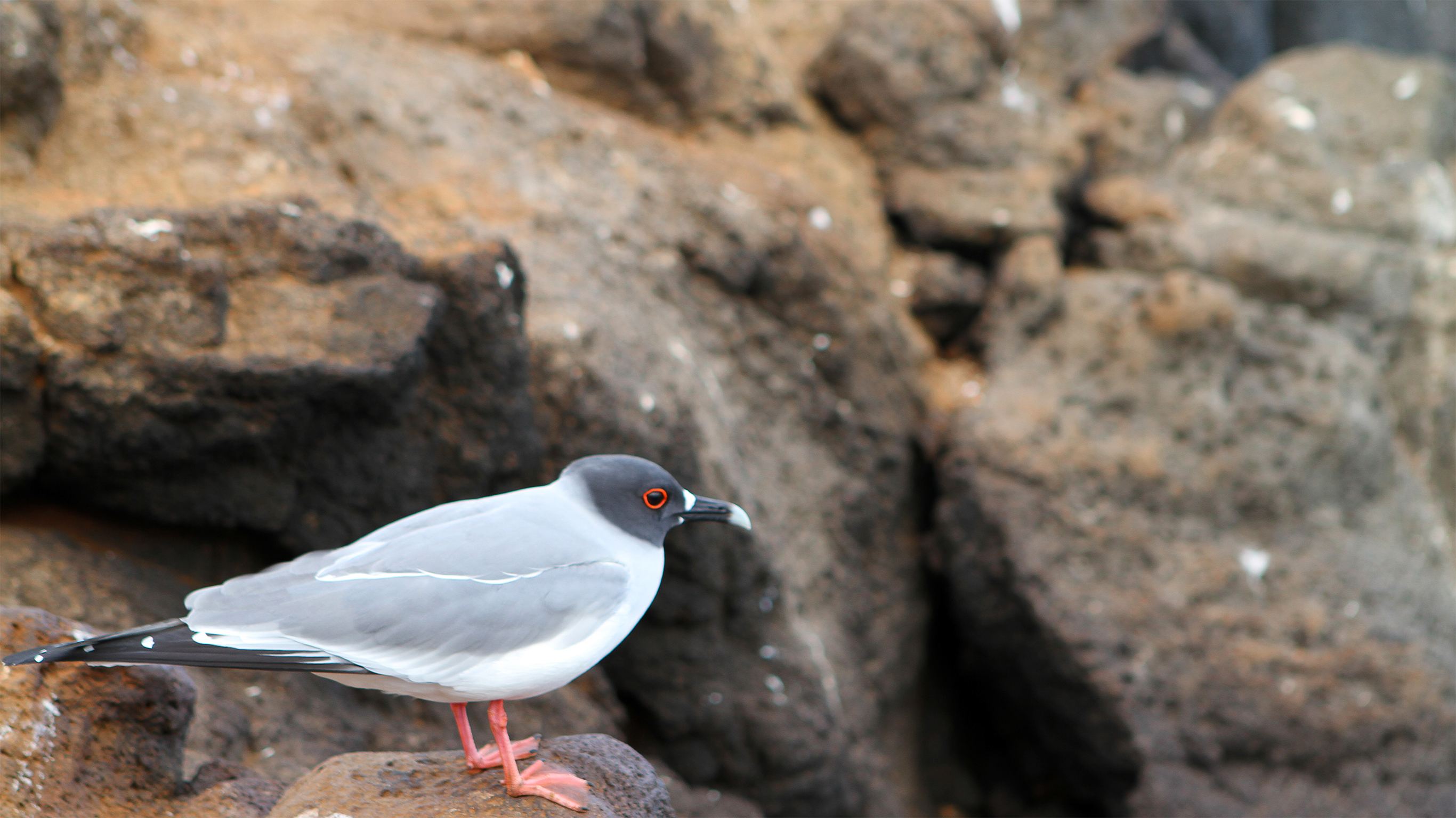 Rare Air Four Birds You Ll Find Only In The Galapagos G