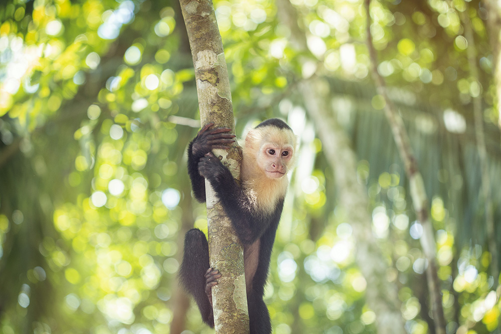 The wildlife of Manuel Antonio is one reason to visit the Costa Rican national park.