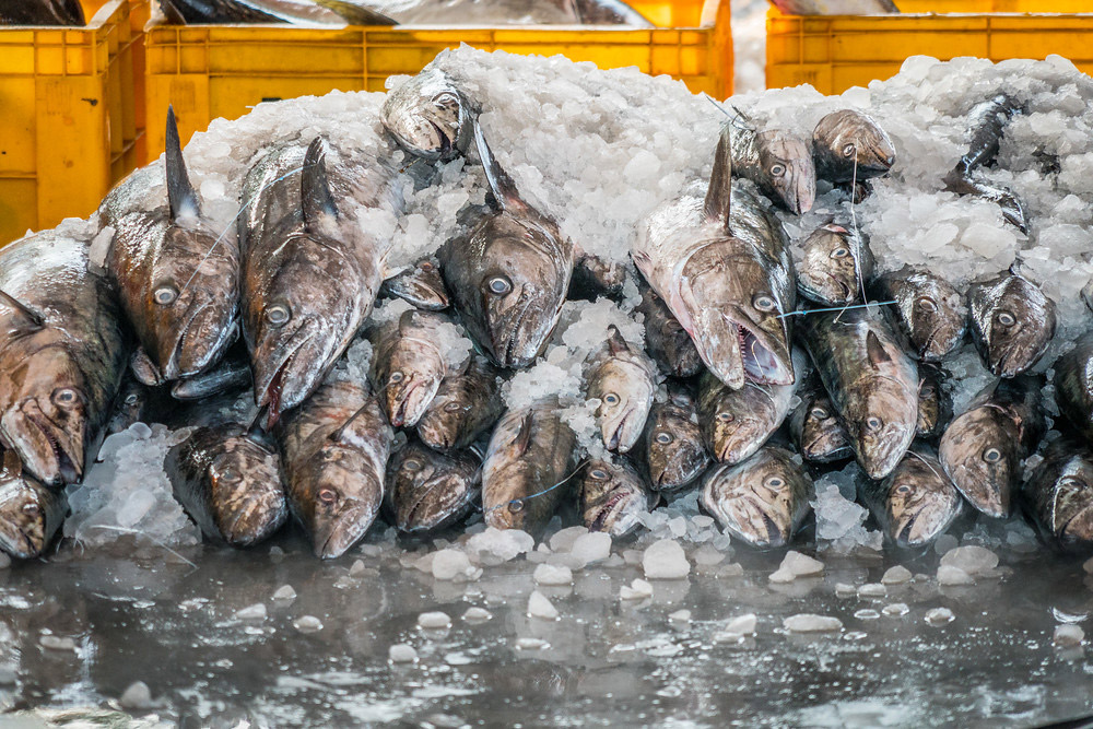 Rows of fish stacked on ice.