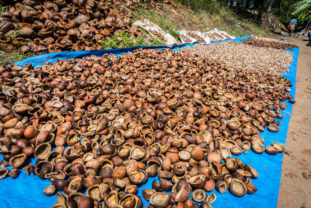 Here are a batch of coconut shells drying in the sun.
