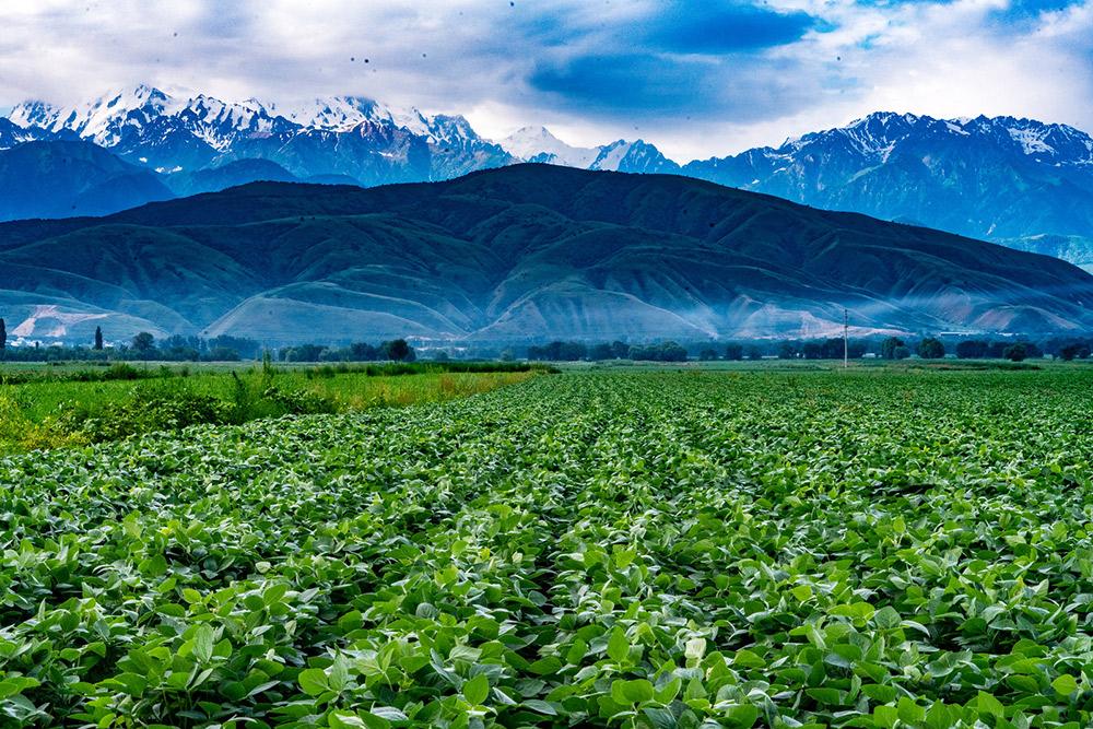 Fields in Almaty, Kazakhstan.