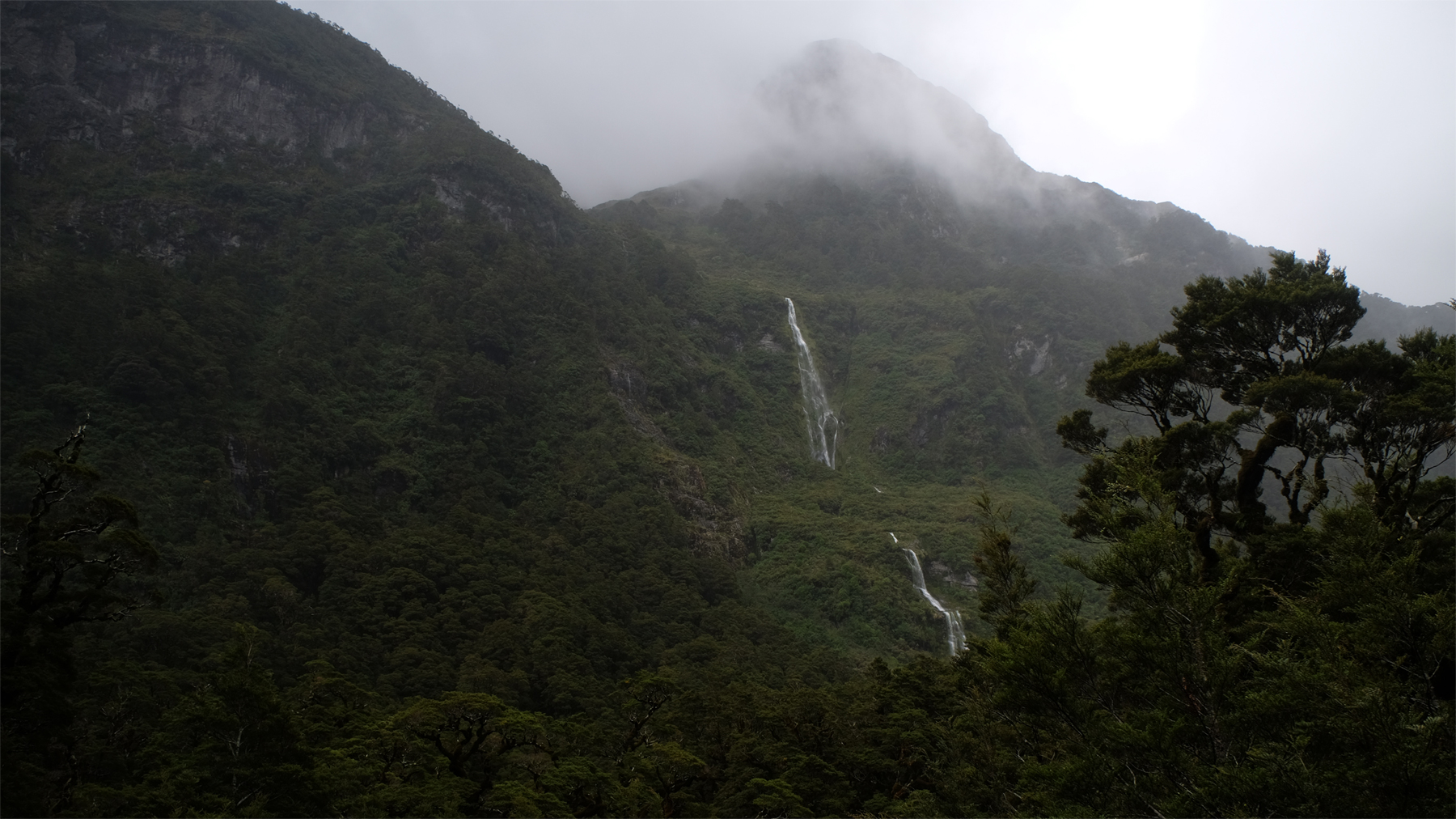 The prehistoric vegetation of Doubtful Sound.
