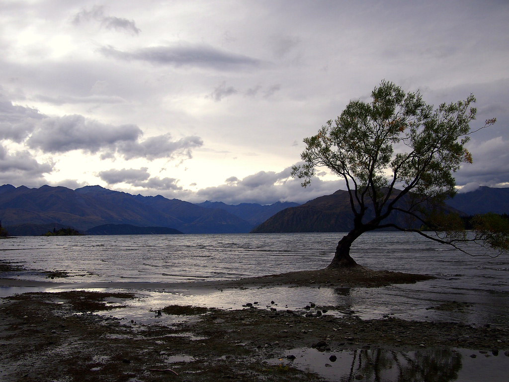 That Wanaka Tree at dawn.