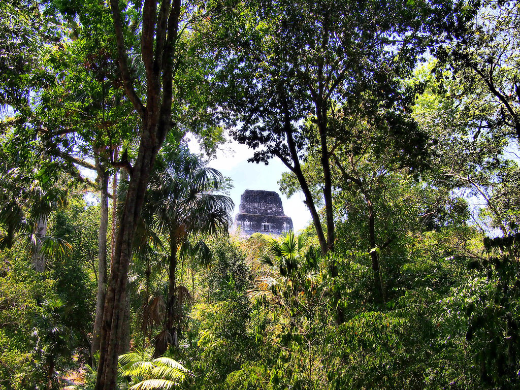 Stone temples surrounded by jungle.