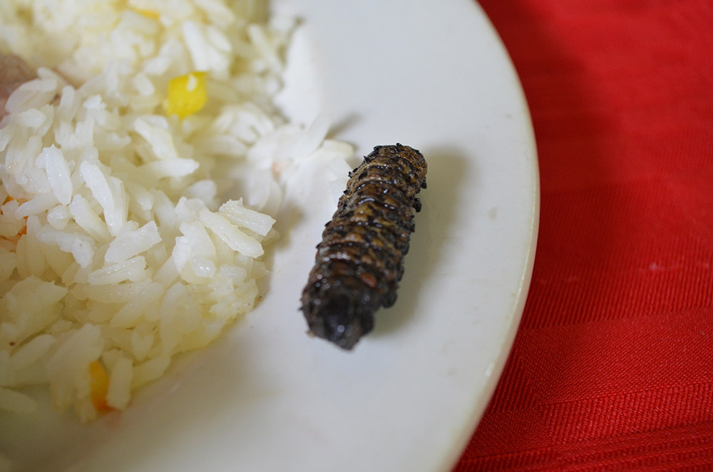 Mopane worm anyone? Photo courtesy Tribp.