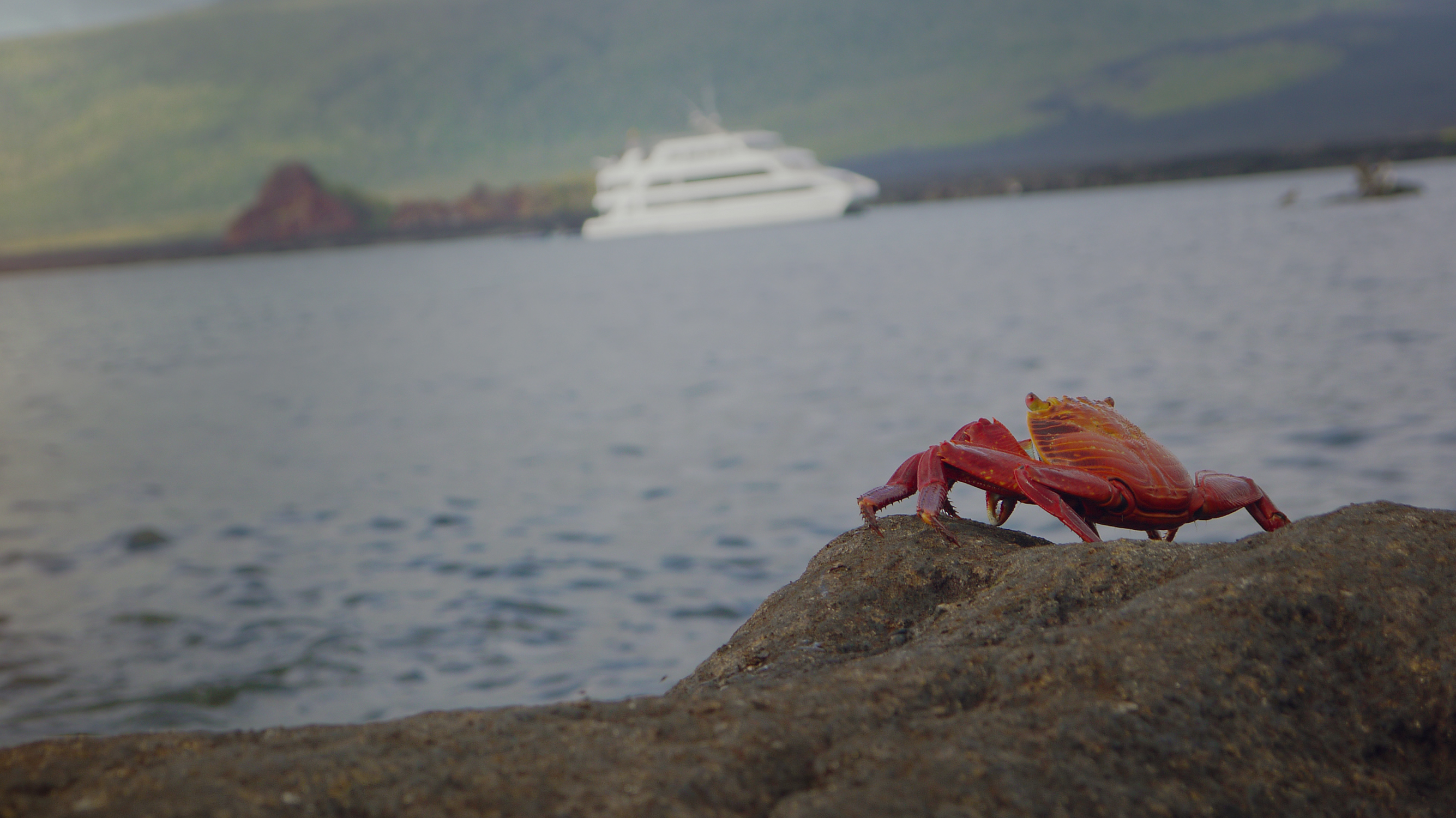Top 5 Things to Take With You to the Galápagos Islands - G Adventures