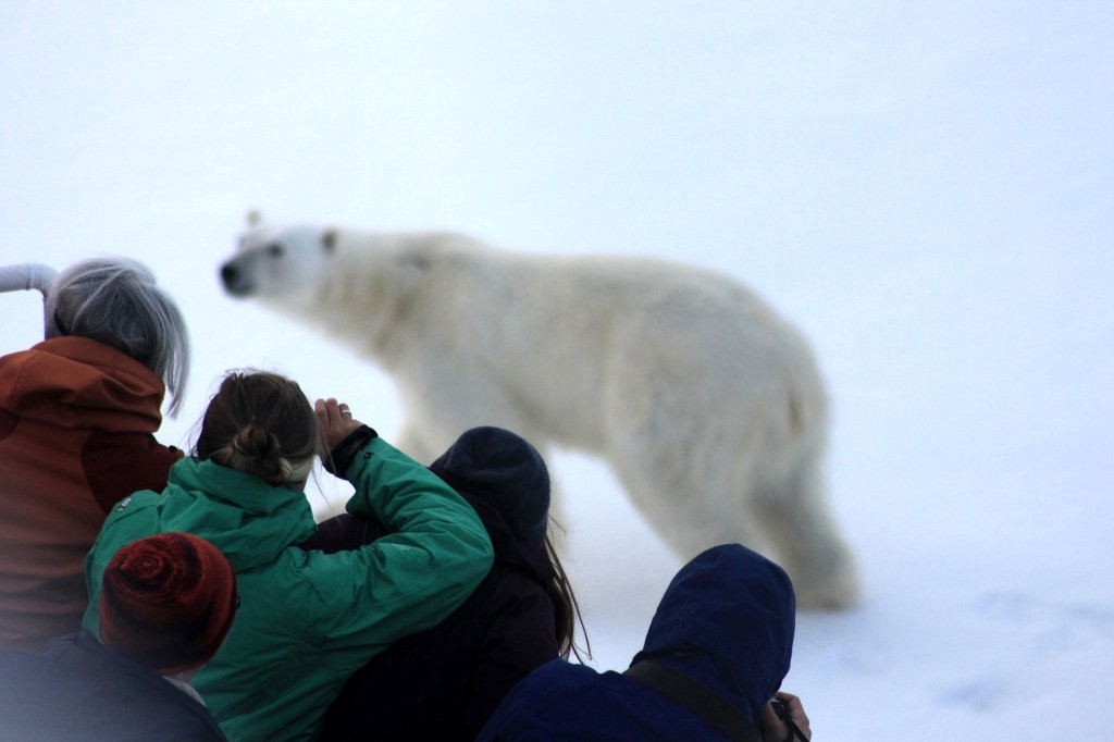e5605c875e66e Highlights of My Arctic Expedition Cruise Voyage - G Adventures