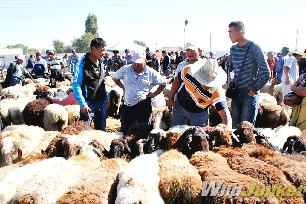 Livestock market in Taraz, Kazakhstan, where hundreds of cattle and sheep are on sale.