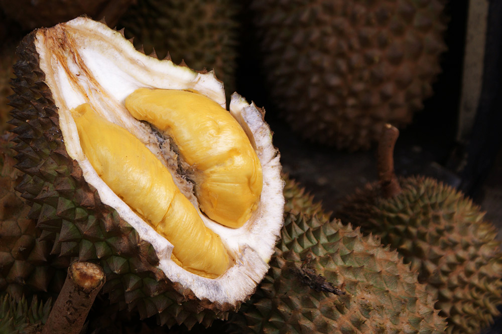 Durian fruit is often known as the King of Fruit. Photo courtesy Teddy R.