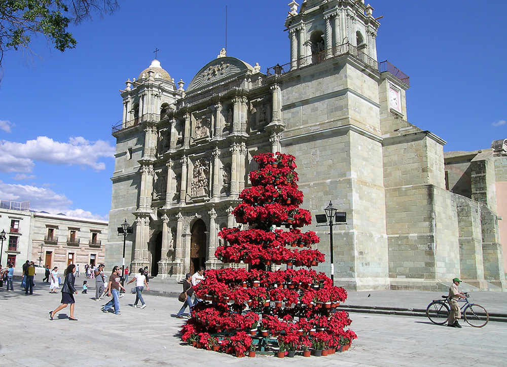 "A poinsettia ""tree"" adorns the square in front of the Cathedral of Our Lady of the Assumption in Oaxaca. Photo courtesy Kim F."
