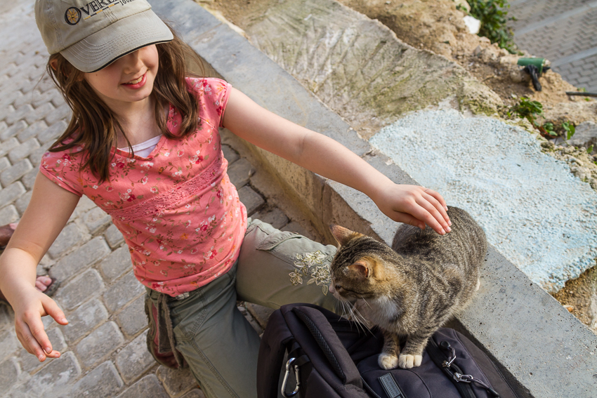 What did my daughter love about almost any place we visited in Morocco? The friendly cats.